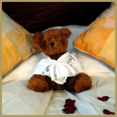 Teddy at The Cairndale Hotel